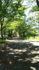 田舎に住むカナエのお散歩道